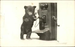 Photograph of Small Bear Cub Near Speaker of Wall Phone