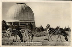 Observatory and Game Reserve Postcard