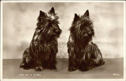 Two of a Kind - Black Terriers