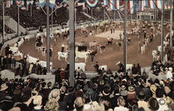 Parade of Champion Cattle in Hippodrom