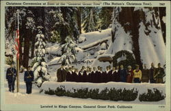 "Christmas Ceremonies at base of the ""General Grant Tree"""