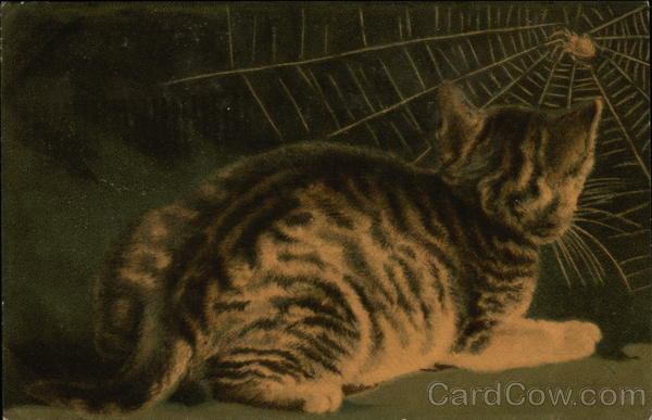 Striped Cat Observes a Spider in Its Web Cats
