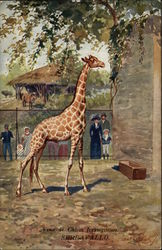Giraffe in Zoo Enclosure