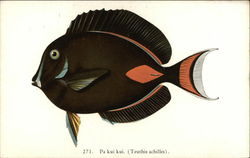 Pa kui kui - Fishes of Hawaii