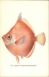 Fishes of Hawaii - Laipala