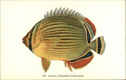 Lauhau Fish of Hawaii