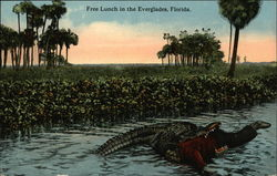 Free Lunch in the Everglades, Florida