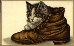 Kitten in a Boot