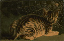 Striped Cat Observes a Spider in Its Web