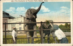 The Elephants at Franklin Park, Boston, Mass