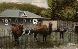 Moila's Camels Krug's Park, St. Joseph, MO