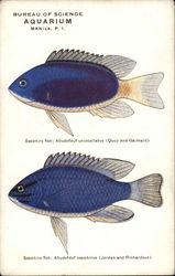 Two Views of Sapphire Fish - Bureau of Science Aquarium- Manila, PI