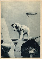 """Talisman"" - Puppy Standing on Airplane"