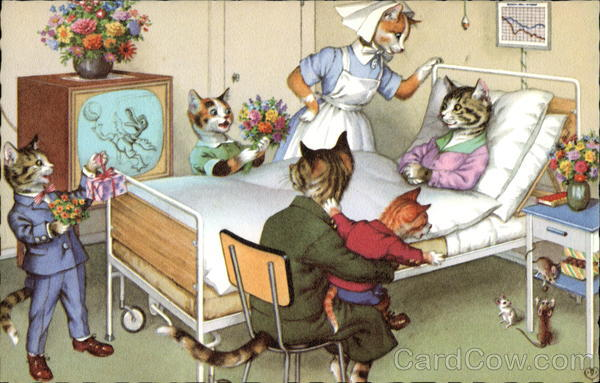 Cats Dressed in Clothing in Hospital Room