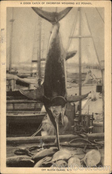 A Good Catch of Swordfish Weighing 612 Pounds Block Island Rhode Island