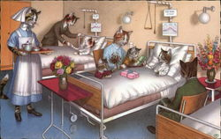 Cat Family Visits Kitten in the Hospital