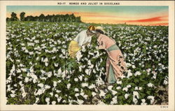 Romeo and Juliet in Dixieland - Couple in Cotton Field