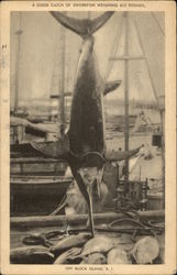 A Good Catch of Swordfish Weighing 612 Pounds