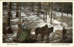 Gathering the Sap, Making Maple Sugar Series