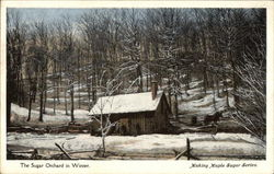 The Sugar Orchard in Winter, Making Maple Sugar Series