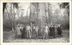 "The ""Big Tree"" oldest cypress in the US"