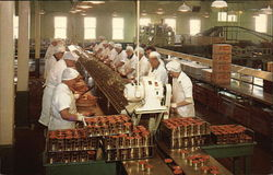 Salmon Canning Production Line