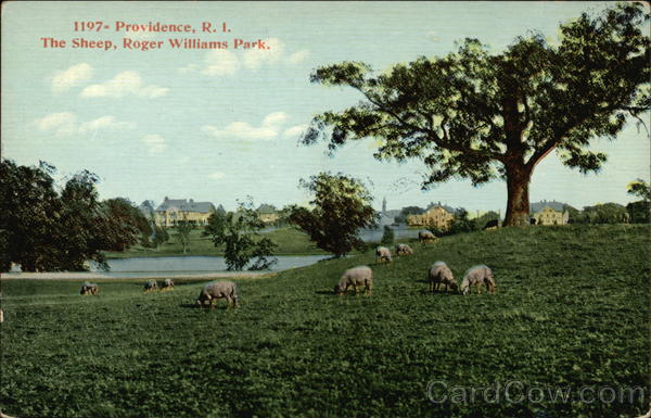 The Sheep in Roger Williams Park Providence Rhode Island