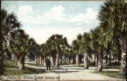 View of Man in Palmetto Grove