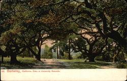 Oaks at University Grounds