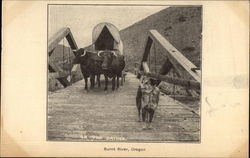 Ox-Drawn Wagon on Bridge