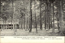 The Groves Were God's First Temples, Wharton Grove