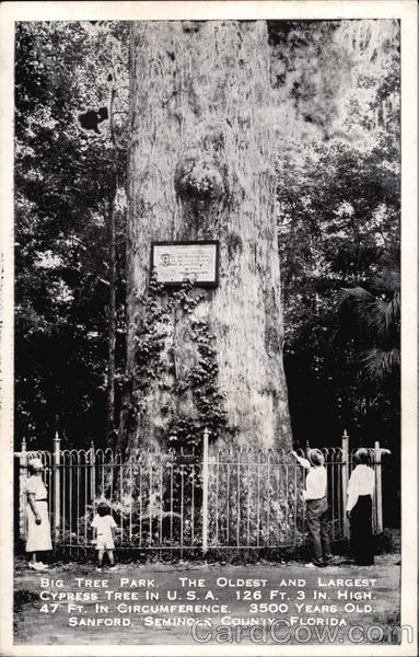 Big Tree Park, the Oldest and Largest Cypress Tree in U.S.A. 126 Ft. 3 in. High 47 Ft. in Circumfere