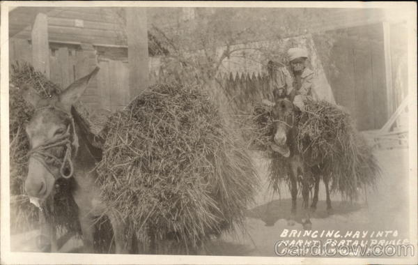 Bringing Hay into Market Port-au-Prince Haiti Caribbean Islands