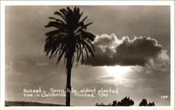 Sunset - Serra Palm, Oldest Planted Tree in California, Planted 1769