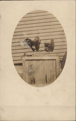 Rooster and Hen Standing on a Wooden Crate