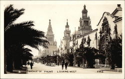 Avenue of Palms, Looking West