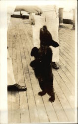 Navy Man on Board Ship Feeling Small Black Bear