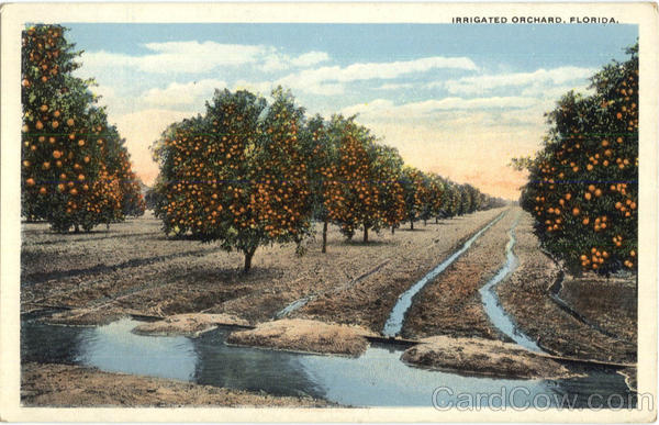 Irrigated Orchard Scenic Florida