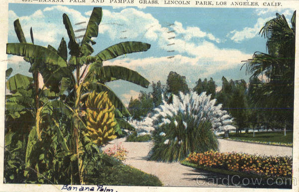 Banana Palm And Pampas Grass, Lincoln Park Los Angeles California