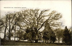 Washington Oak, Brandwine Springs