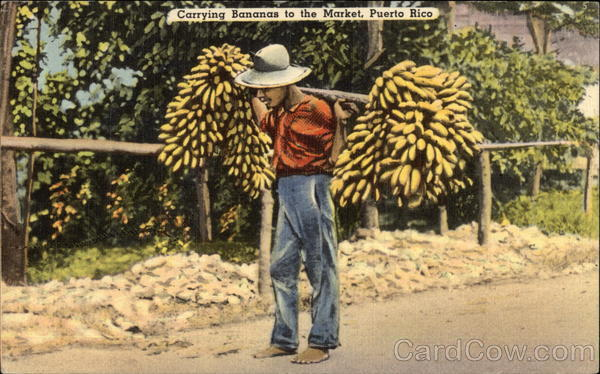 Carrying Bananas to the Market Old Postcard