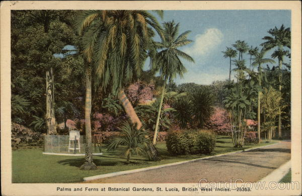 Palms and Ferns at Botanical Gardens St. Lucia, British West Indies