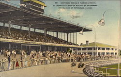 St.Petersburg Kennel Club - Derby Lane, Greyhound Racing