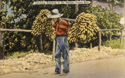Carrying Bananas to the Market
