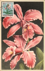 Pink Orchids Postcard