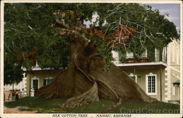 Silk Cotton Tree Nassau Bahamas Caribbean Islands