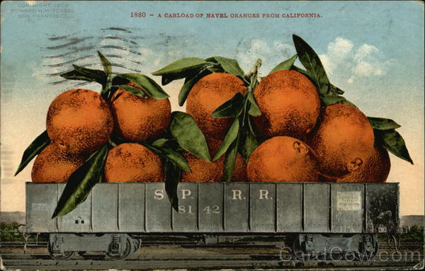 A Carload of Navel Oranges from California Exaggeration