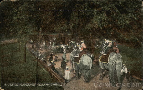Scene in Zoological Gardens, London England