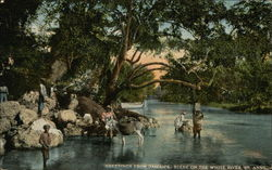 Greetings from Jamaica, Scene on the White River, St. Anns