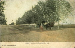 Horse and Cart on County Road